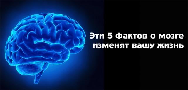 Наш мозг уникален