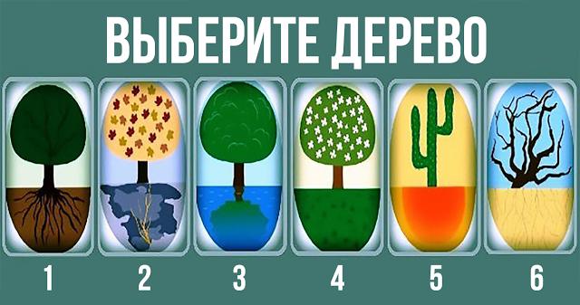 Выберите дерево!