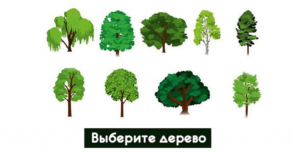 Древнескандинавский тест! Выберите дерево души и смотрите свое предсказание!