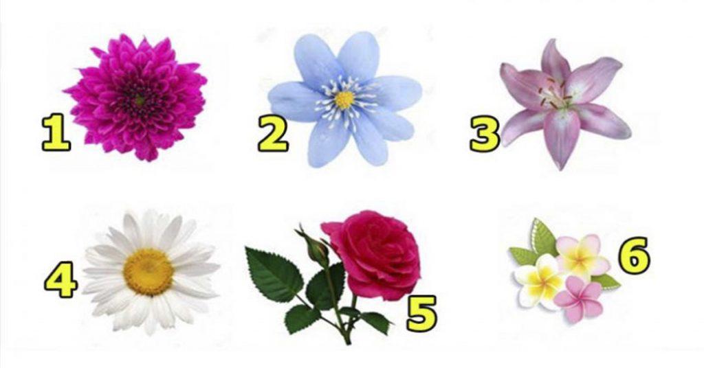 Хотите узнать, насколько Вы очаровательны? Просто выберите цветочек…