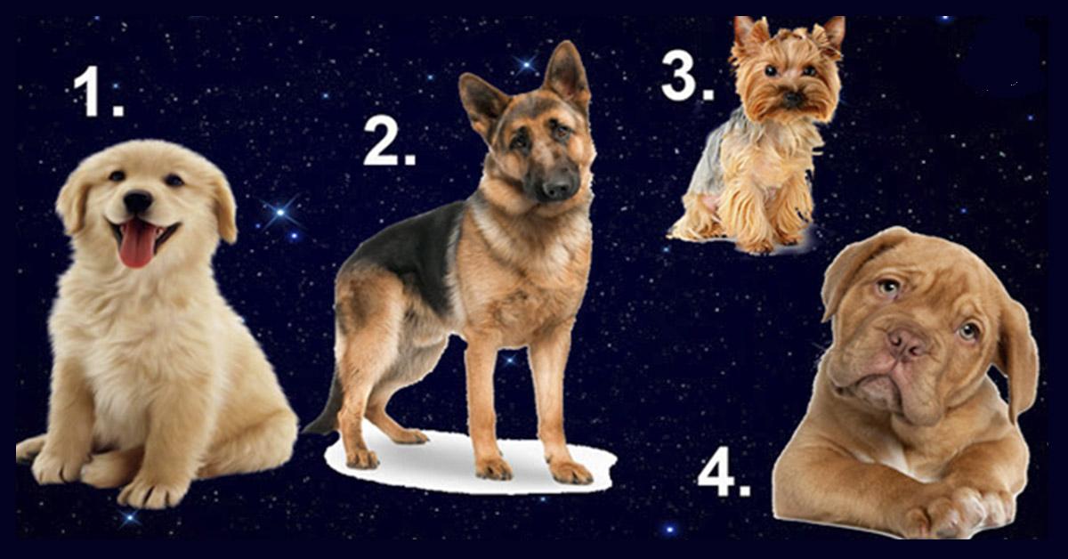 Вы не поверите, но выбранная собака расскажет все о Вашем идеале мужчины!