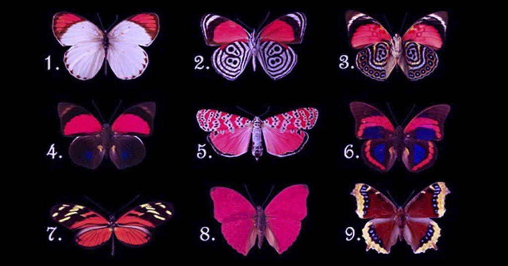 Удивительный тест! Выберите бабочку и узнайте, какие мысли Вы скрываете!