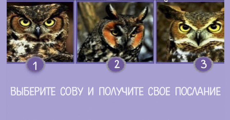 Выберите самую мудрую сову и получите свое предсказание! Вы не поверите, что она расскажет…