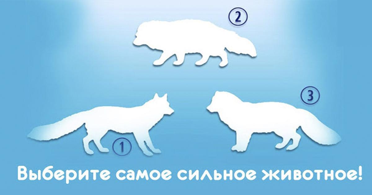 Уникальный тест! А как Вы думаете, кто из животных самый сильный?