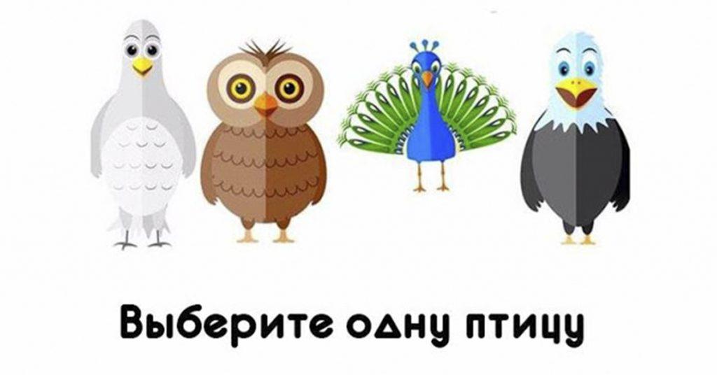 Какие красивые птицы! Выберите одну из этих птиц и узнайте о своей личности!