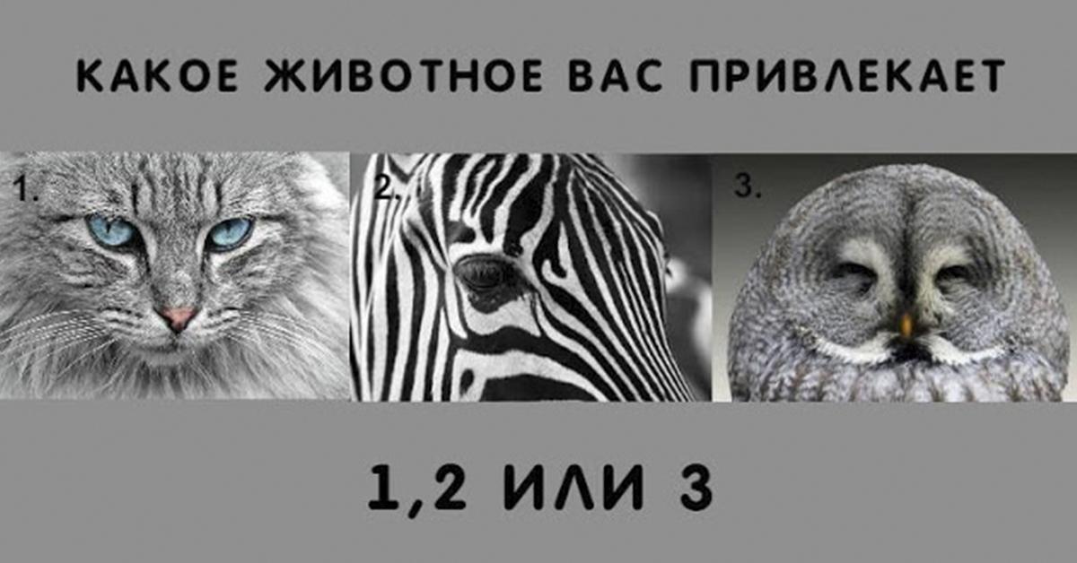 Выберите животное, которое Вас привлекает больше всего! Результат точно удивит
