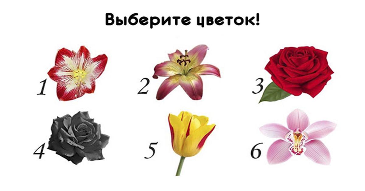 Выберите самый красивый цветок и узнайте необычные факты о себе!