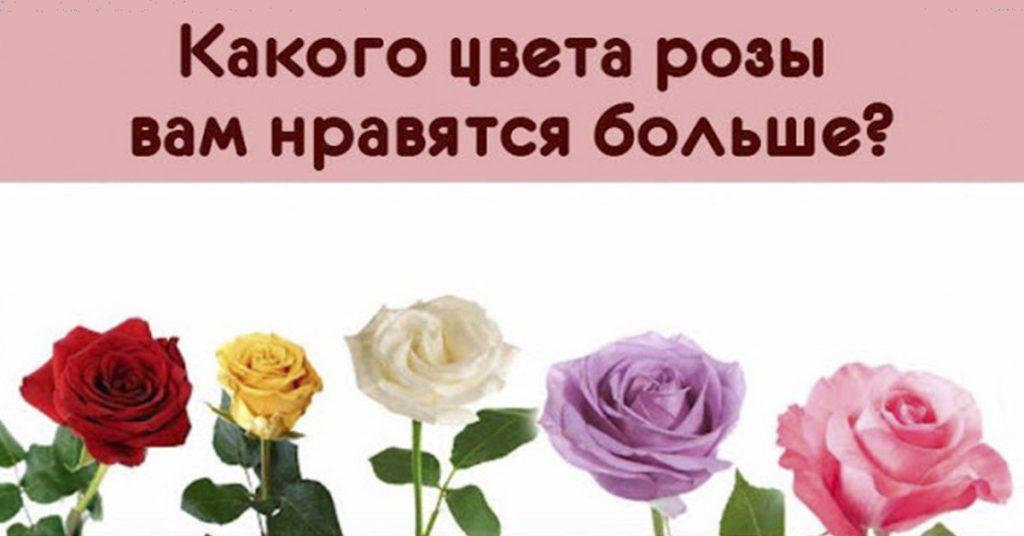 Вам подарили кучу роз! Какая роза понравилась Вам больше всего?