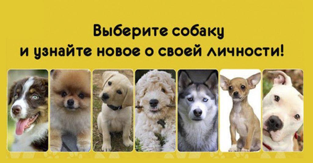 Самый милый тест в мире! Выберите собачку и узнайте новые факты о себе!