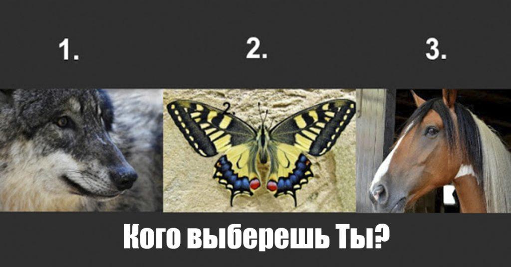 Вы не поверите, о чем расскажет Ваш выбор… Какое животное нравится Вам больше всего?